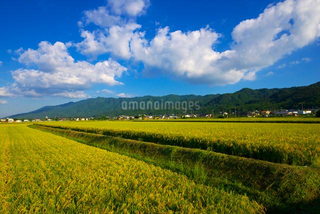 稲穂と耳納連山の写真素材 [FYI01610722]
