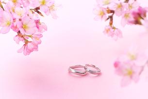 結婚指輪と桜の写真素材 [FYI01610732]