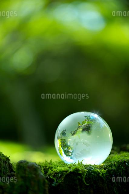 地球儀と苔の写真素材 [FYI01610859]