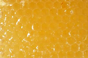 蜂蜜の写真素材 [FYI01611010]