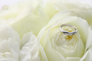 結婚指輪とバラの写真素材 [FYI01611133]