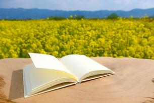 白紙の本と菜の花の写真素材 [FYI01611181]