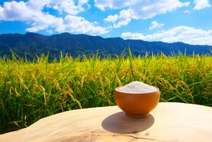 米と稲穂の写真素材 [FYI01611246]