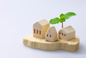 木の家とミントの写真素材 [FYI01611459]