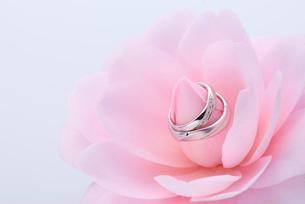 結婚指輪と椿の写真素材 [FYI01611687]