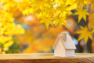 ミニチュアハウスと黄葉の写真素材 [FYI01611898]
