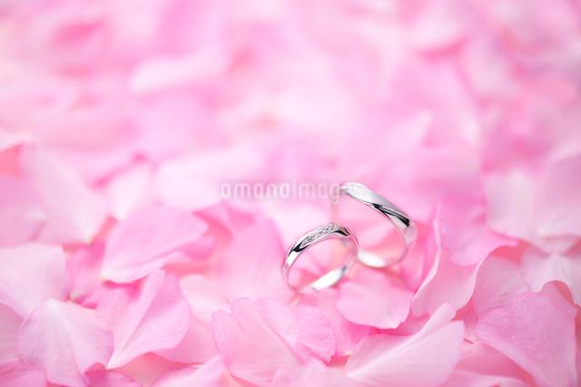 結婚指輪と桜の花びらの写真素材 [FYI01612022]