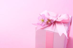 ギフトボックスと桜の写真素材 [FYI01612153]