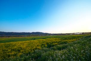 耳納連山を背景に筑後川河川敷の菜の花の写真素材 [FYI01612219]