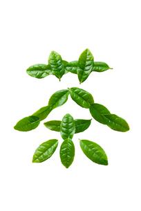 茶葉の文字の写真素材 [FYI01612242]