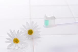 歯ブラシとマーガレットの写真素材 [FYI01612257]