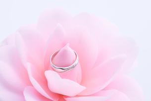 結婚指輪と椿の写真素材 [FYI01612439]