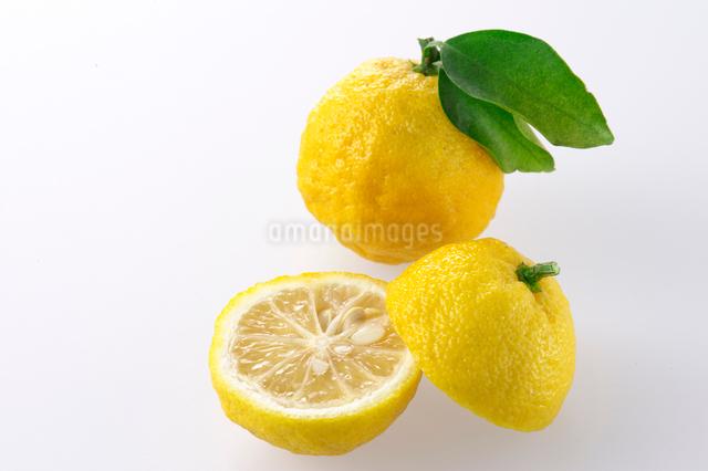 柚子の写真素材 [FYI01612608]