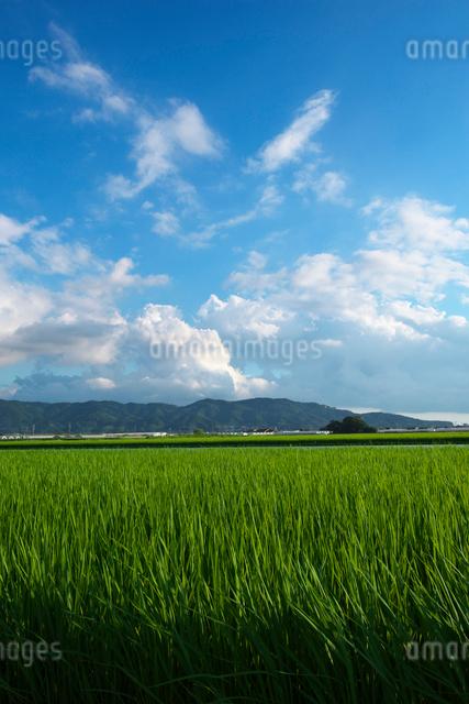 耳納連山と水田の写真素材 [FYI01612613]