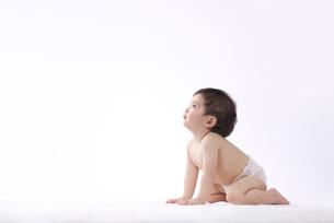 赤ちゃんの写真素材 [FYI01612707]