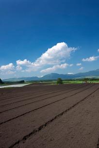 阿蘇の畑の写真素材 [FYI01612726]