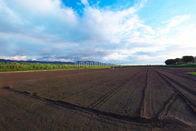 畑の土の写真素材 [FYI01612734]
