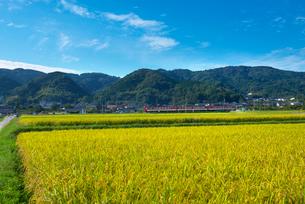 耳納連山を背景に稲穂の写真素材 [FYI01612791]