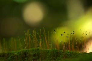 苔の写真素材 [FYI01612801]