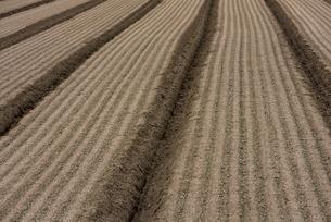 畑の土 の写真素材 [FYI01612866]
