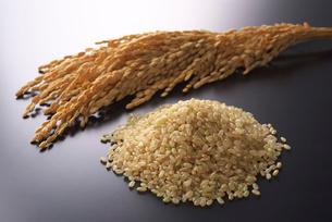 玄米の写真素材 [FYI01612935]