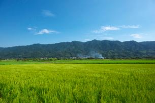 耳納連山と稲の写真素材 [FYI01613506]