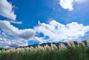 パンパスグラスと耳納連山の写真素材 [FYI01613535]