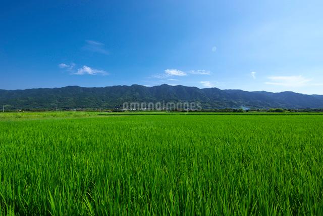 福岡県 耳納連山の写真素材 [FYI01613678]