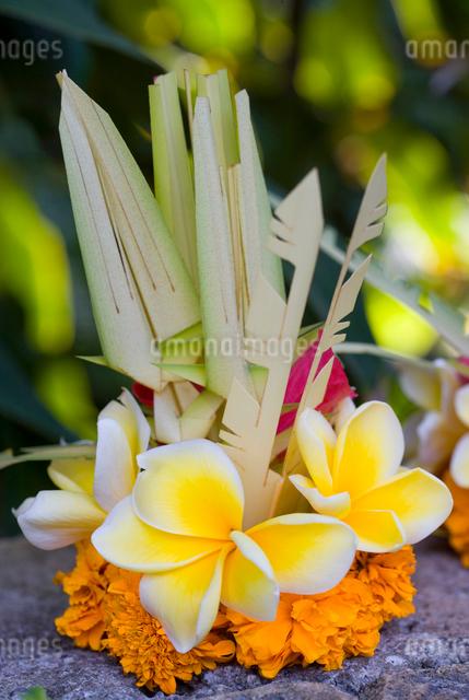 バリ島の花の写真素材 [FYI01614211]