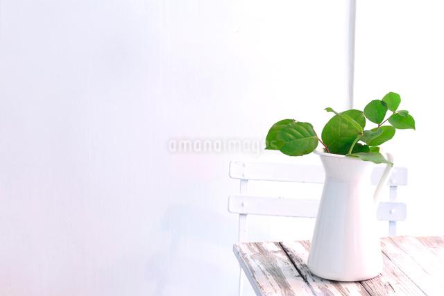 木のテーブルと水差しに活けたレモングラスの枝の写真素材 [FYI01614296]