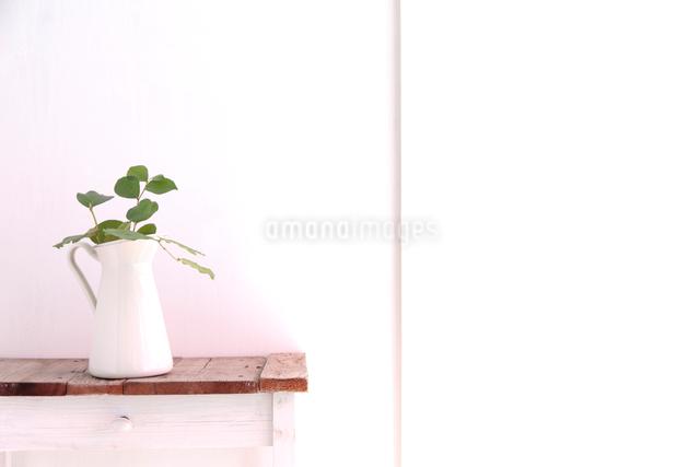 サイドテーブルに置いた水差しに活けたレモングラスの枝の写真素材 [FYI01614465]