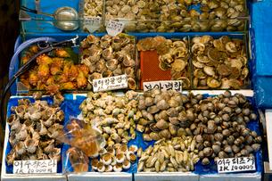 鷺梁津水産市場に並ぶ新鮮な貝類の写真素材 [FYI01614473]