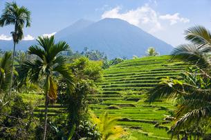 ジャティルウィの美しい緑の棚田の景色の写真素材 [FYI01614480]