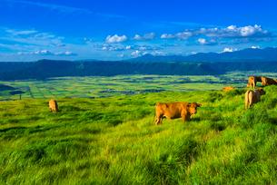 阿蘇の大草原の写真素材 [FYI01614571]