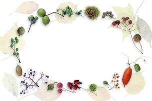 落ち葉と秋の実の フレームの写真素材 [FYI01614665]