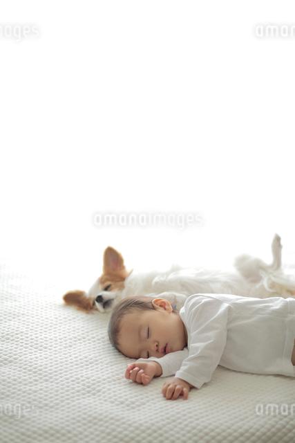 眠る子供とパピヨンの写真素材 [FYI01614769]