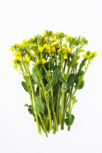 アスパラ菜の写真素材 [FYI01615254]