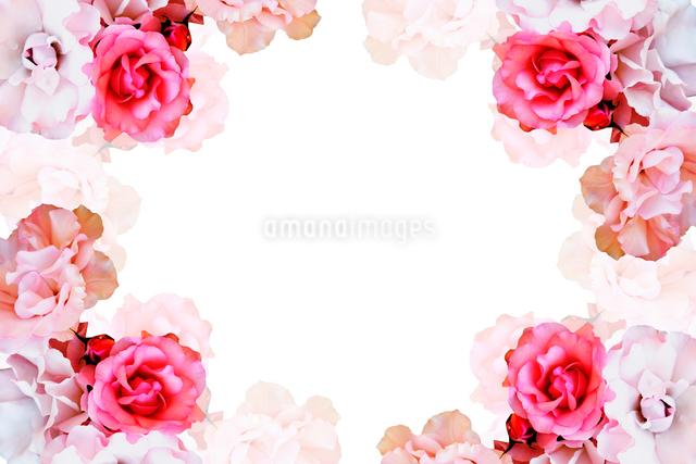 バラのフレームの写真素材 [FYI01615289]