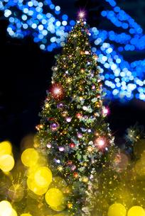 クリスマスツリーの写真素材 [FYI01615379]