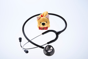 ペット医療イメージの写真素材 [FYI01615388]