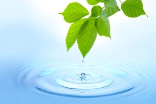 水と新緑の写真素材 [FYI01615596]