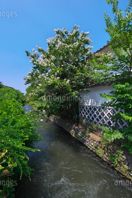 福岡県 吉井町の写真素材 [FYI01615631]