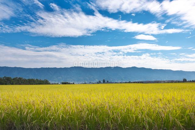稲と耳納連山の写真素材 [FYI01615748]