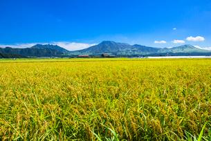 阿蘇五岳を背景に阿蘇の田園風景の写真素材 [FYI01615756]
