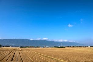 耳納連山を背にしたうきは市の麦畑の写真素材 [FYI01615758]