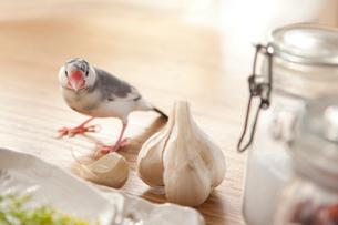 にんにくのあるテーブルの上を散歩する小鳥の写真素材 [FYI01616351]