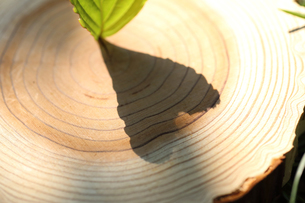 葉の影ハートマークの写真素材 [FYI01616597]