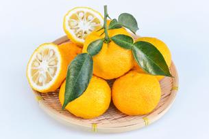 葉付き 柚子の写真素材 [FYI01617438]