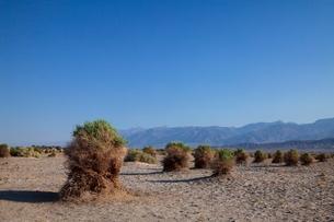 悪魔のコーン畑 デスバレー国立公園の写真素材 [FYI01617629]