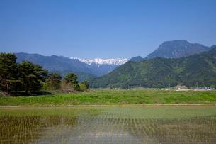 安曇野の水田と有明山の写真素材 [FYI01617832]